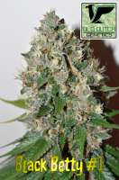euphoric weed strains