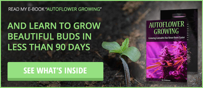 how long does it take seeds to sprout